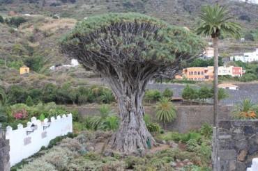 Parco del Drago Millenario Tenerife