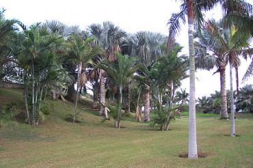 Palmetum di Santa Cruz de Tenerife