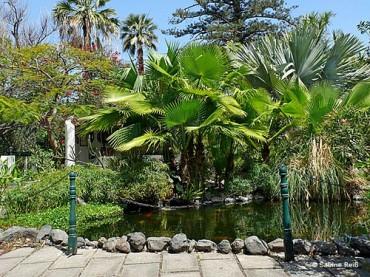 Jardin Sitio Litre Tenerife